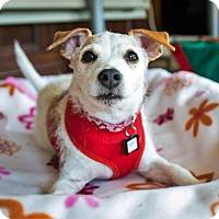 Adopt A Pet :: Tessie - San Francisco, CA
