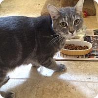 Adopt A Pet :: Kuiper - North Highlands, CA