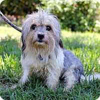 Adopt A Pet :: Dwyer - San Diego, CA