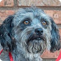 Adopt A Pet :: Princess - San Marcos, CA
