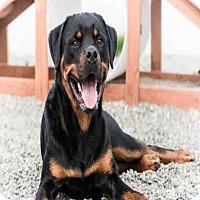 Adopt A Pet :: LINCOLN - Palmer, AK