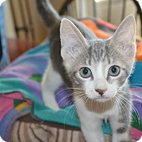 Adopt A Pet :: Jackson - Flower Mound, TX