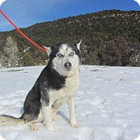 Adopt A Pet :: Tristan - Ridgway, CO