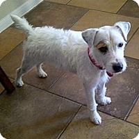 Adopt A Pet :: Benson - Harrah, OK