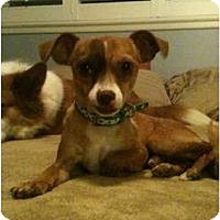 Adopt A Pet :: Petie - Fresno, CA