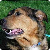 Adopt A Pet :: May - Rigaud, QC
