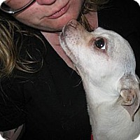 Adopt A Pet :: Zoey - Carpenteria, CA