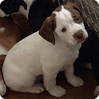 Adopt A Pet :: Rudy - Wilmette, IL
