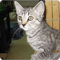 Adopt A Pet :: Sally - Catasauqua, PA