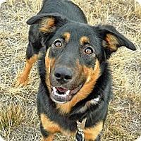 Adopt A Pet :: Tasha - Cheyenne, WY