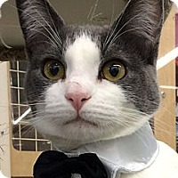 Adopt A Pet :: Dusty - Winchester, CA
