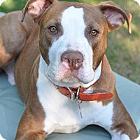 Adopt A Pet :: Vegas - Santa Monica, CA