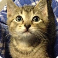 Adopt A Pet :: Austin - Long Beach, NY