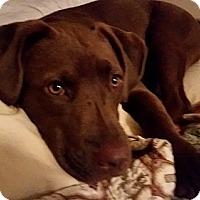 Adopt A Pet :: Charlie (i'm a girl!!) - Brattleboro, VT