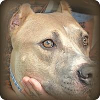 Adopt A Pet :: Tonka - Miami, FL
