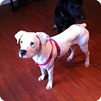 Adopt A Pet :: Gabby (courtesy listing) - Brentwood, TN