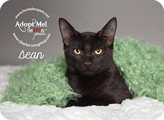 Domestic Shorthair Cat for adoption in Houston, Texas - Sean