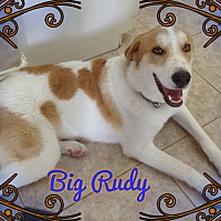 Adopt A Pet :: Big Rudy - Houston, TX