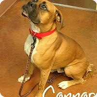 Adopt A Pet :: Connor - Scottsdale, AZ