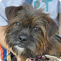Adopt A Pet :: Cindy Crawford - Atlanta, GA