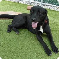 Adopt A Pet :: Buddy #9 - Purcellville, VA