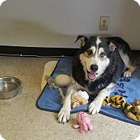 Adopt A Pet :: Keiko - Cashiers, NC