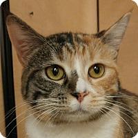 Adopt A Pet :: Pandora - Winchester, CA