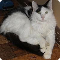 Adopt A Pet :: Lady - Baton Rouge, LA
