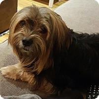 Adopt A Pet :: Rio - Special Needs - Washington, DC