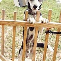 Adopt A Pet :: Banjo - Newport, KY