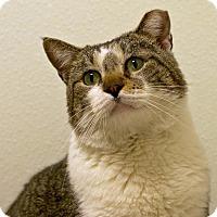 Adopt A Pet :: Gareth - Troy, MI