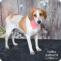 Adopt A Pet :: VICTORIA - Conroe, TX