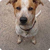 Adopt A Pet :: Ella - Ocala, FL
