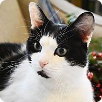 Adopt A Pet :: Frito - Bristol, CT