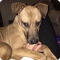 Adopt A Pet :: Zeus - Chattanooga, TN