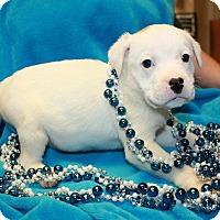 Adopt A Pet :: Egypt - available 1/21 - Sparta, NJ
