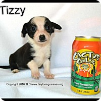 Adopt A Pet :: Tizzy - Simi Valley, CA