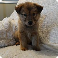Adopt A Pet :: Harper - New Oxford, PA