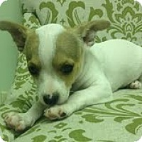 Adopt A Pet :: Tommy - Staunton, VA