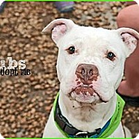 Adopt A Pet :: Bubs - Shavertown, PA