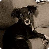 Adopt A Pet :: Aurthur - Austin, AR