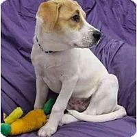 Adopt A Pet :: Daizee - Mocksville, NC