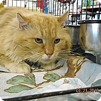 Adopt A Pet :: Leo - Riverside, RI