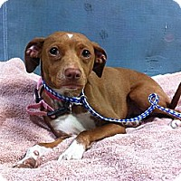 Adopt A Pet :: Stella - Goleta, CA