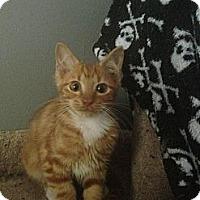 Adopt A Pet :: Hochner - Monroe, GA