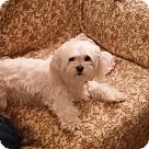 Adopt A Pet :: Tobie