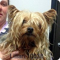 Adopt A Pet :: Lillian - baltimore, MD
