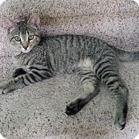 Adopt A Pet :: Peant - Colmar, PA