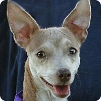 Adopt A Pet :: Demi - Lufkin, TX