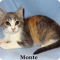 Adopt A Pet :: Monte - Bentonville, AR